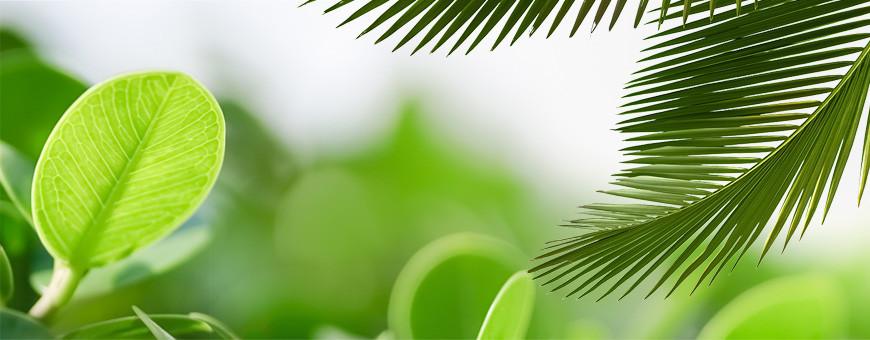 Soins naturels cosmétiques green aux ingrédients actifs de la nature