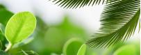 Soins naturels cosmétiques green aux ingrédients actifs
