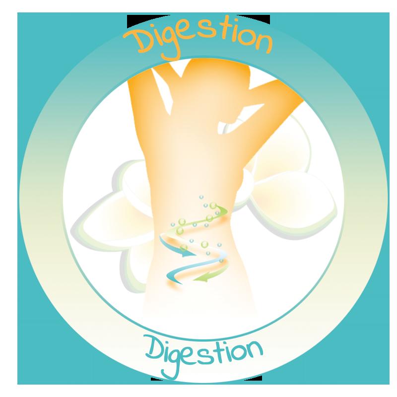 Huile essentielle de menthe poivrée digestion