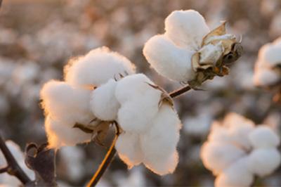 Bougie artisanale fleur de coton