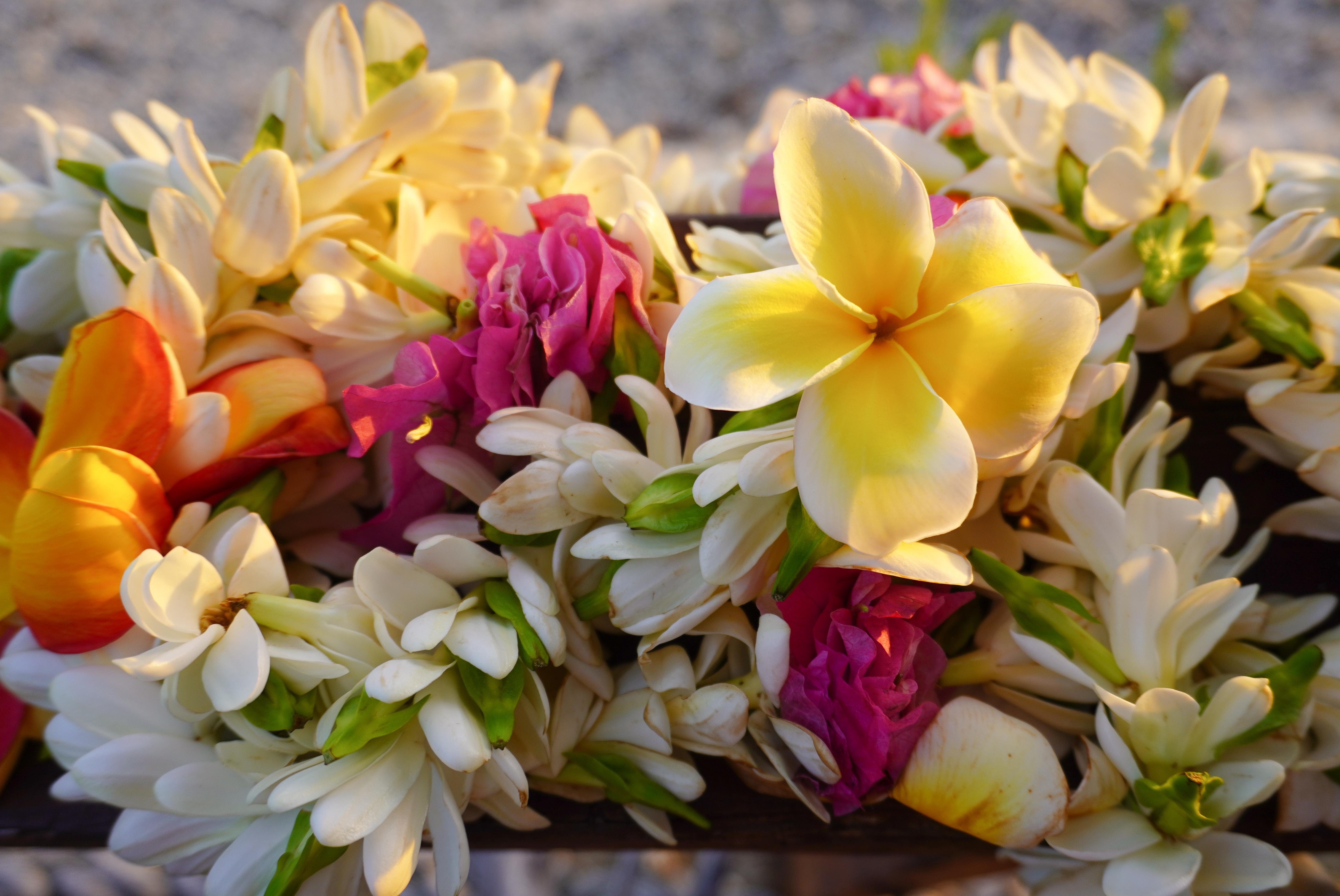 Bougie parfumée fleurs des iles