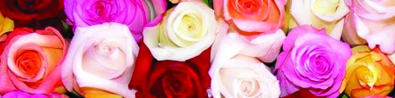 Fondant parfumé à la rose