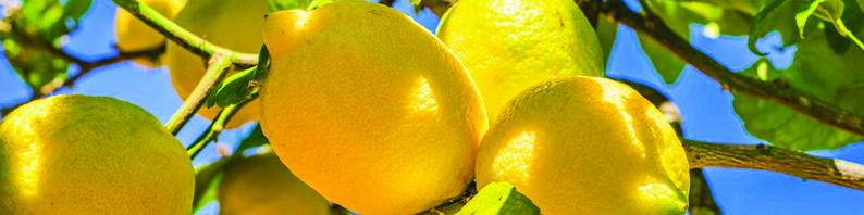 Cire parfumée au Citron