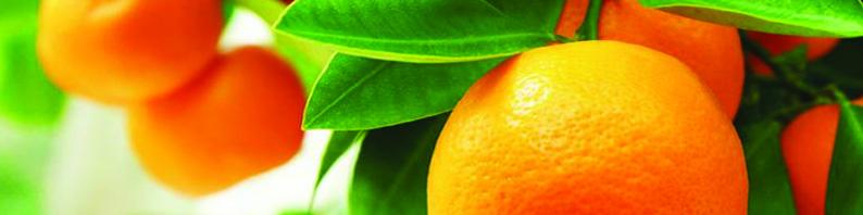 Fondant de parfum orange
