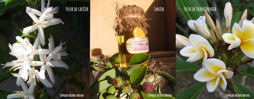 Archipel parfums les essences tropicales