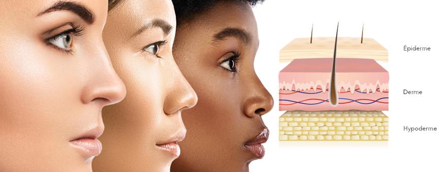 En savoir un peu plus sur la peau